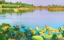 银川鸣翠湖国家湿地公园