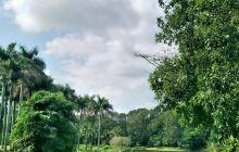 热作两院植物园